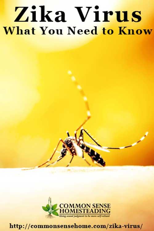 Help on essay zika virus