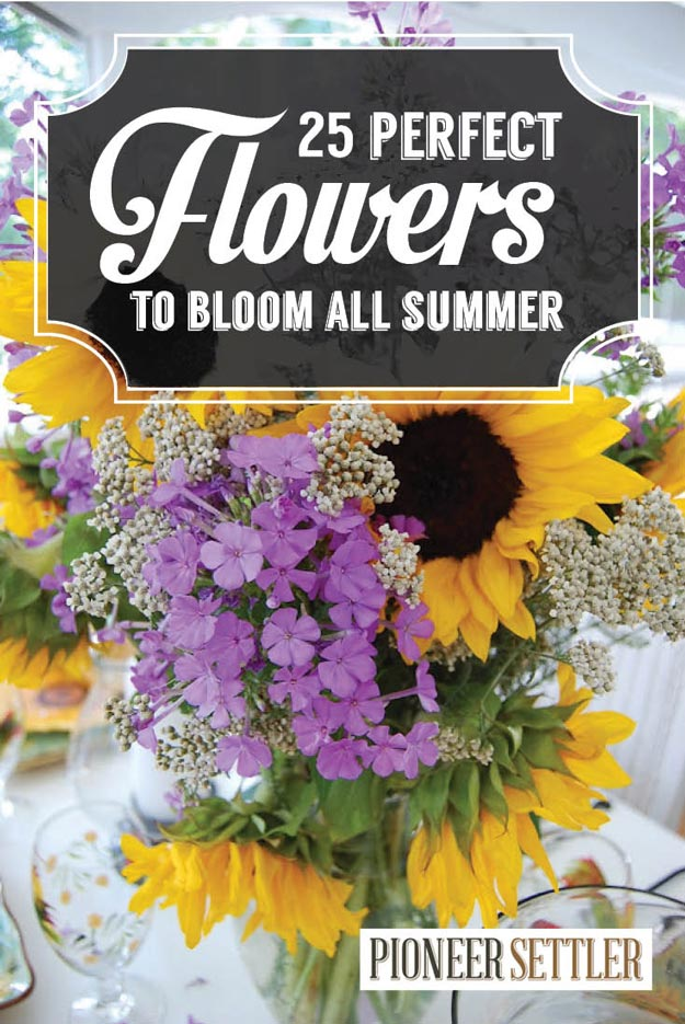 25 types of flowers to plant for summer summer flowers total 25 types of flowers to plant for summer summer flowers total survival mightylinksfo Gallery