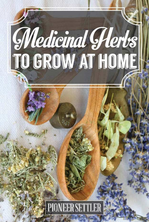 top medicinal herbs to grow at home homesteading tips total survival. Black Bedroom Furniture Sets. Home Design Ideas