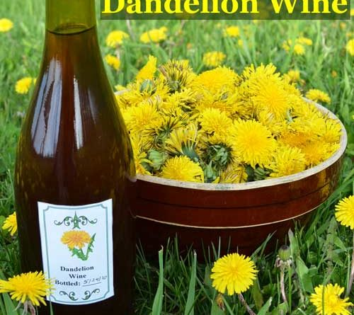 Memo to Scotts – Clover and Dandelions are Good Things