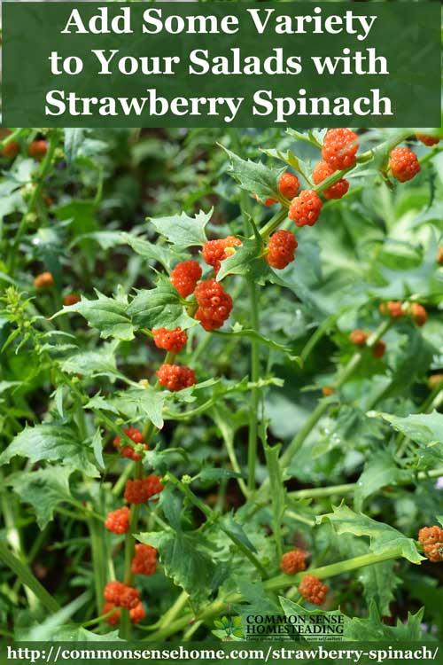 strawberry-spinach-4