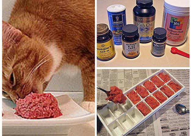 Homemade cat food recipes total survival forumfinder Choice Image