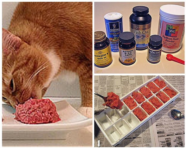 Balanced Homemade Cat Food Recipes