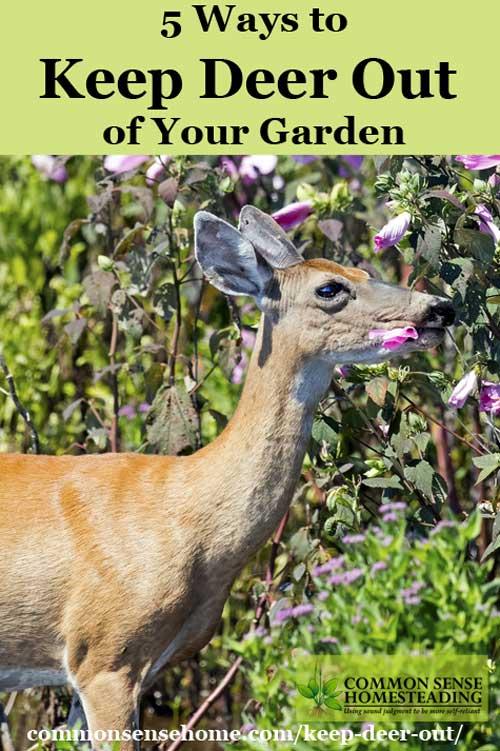 Keep Deer Out Of Your Garden 5 Deer Deterrent Strategies