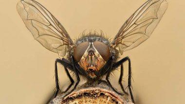 how-to-repel-flies