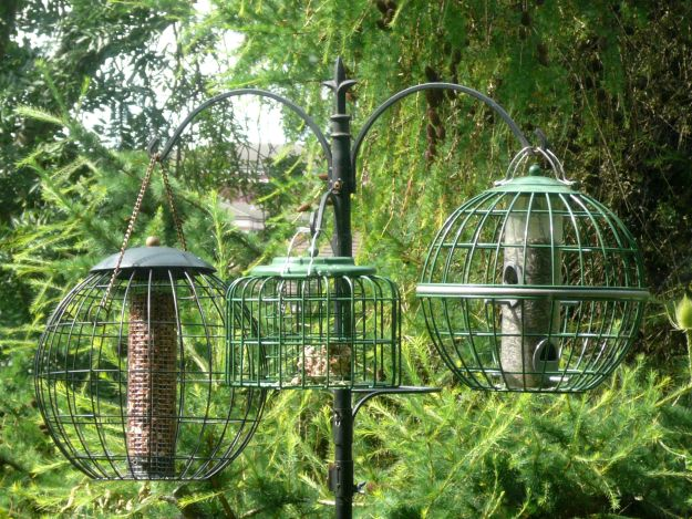 Squirrel Proof Bird Feeders Be A Better Host To Your