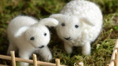 Sheepw-Wool-Featured