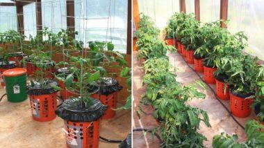 alaska-grow-buckets-640x426