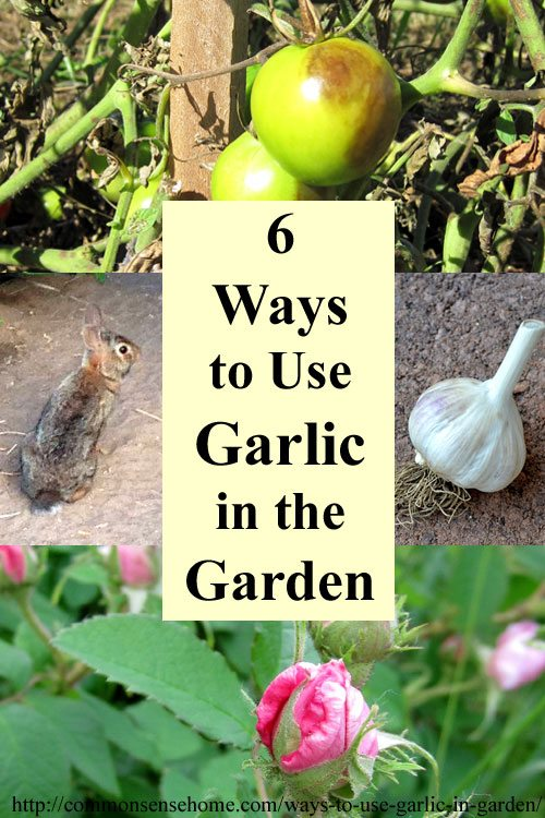 6 ways to use garlic in the garden total survival. Black Bedroom Furniture Sets. Home Design Ideas