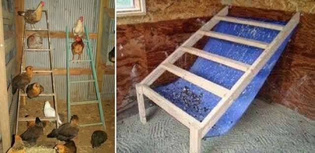 Chicken Coop Poop Hammock Total Survival