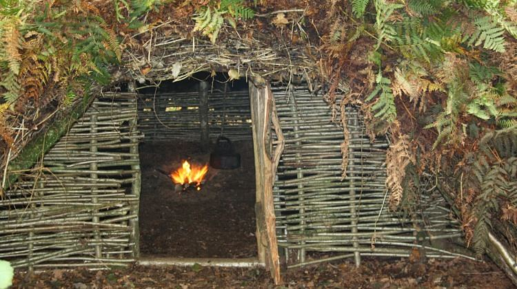 Create-Survival-Shelters-Using-Tree-Branches