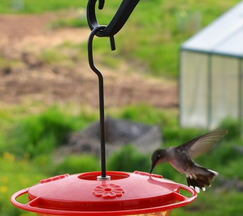 Hummingbird Food Recipe Ratio
