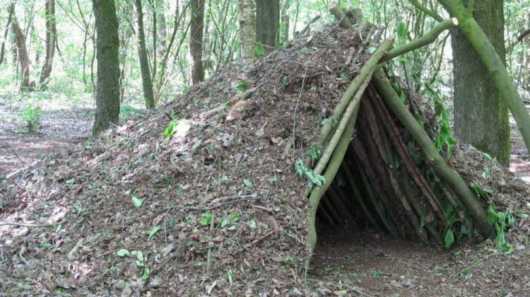 Tips For Building A House In The Woods