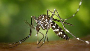 tiger-mosquito-49141_640