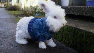 bunny-sweater-640x427