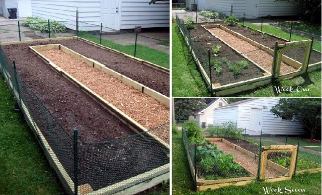 Learn How to Build A UShaped Raised Garden Bed Total Survival – U Shaped Raised Garden Bed Plans