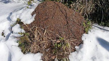 compost-winter-wiki