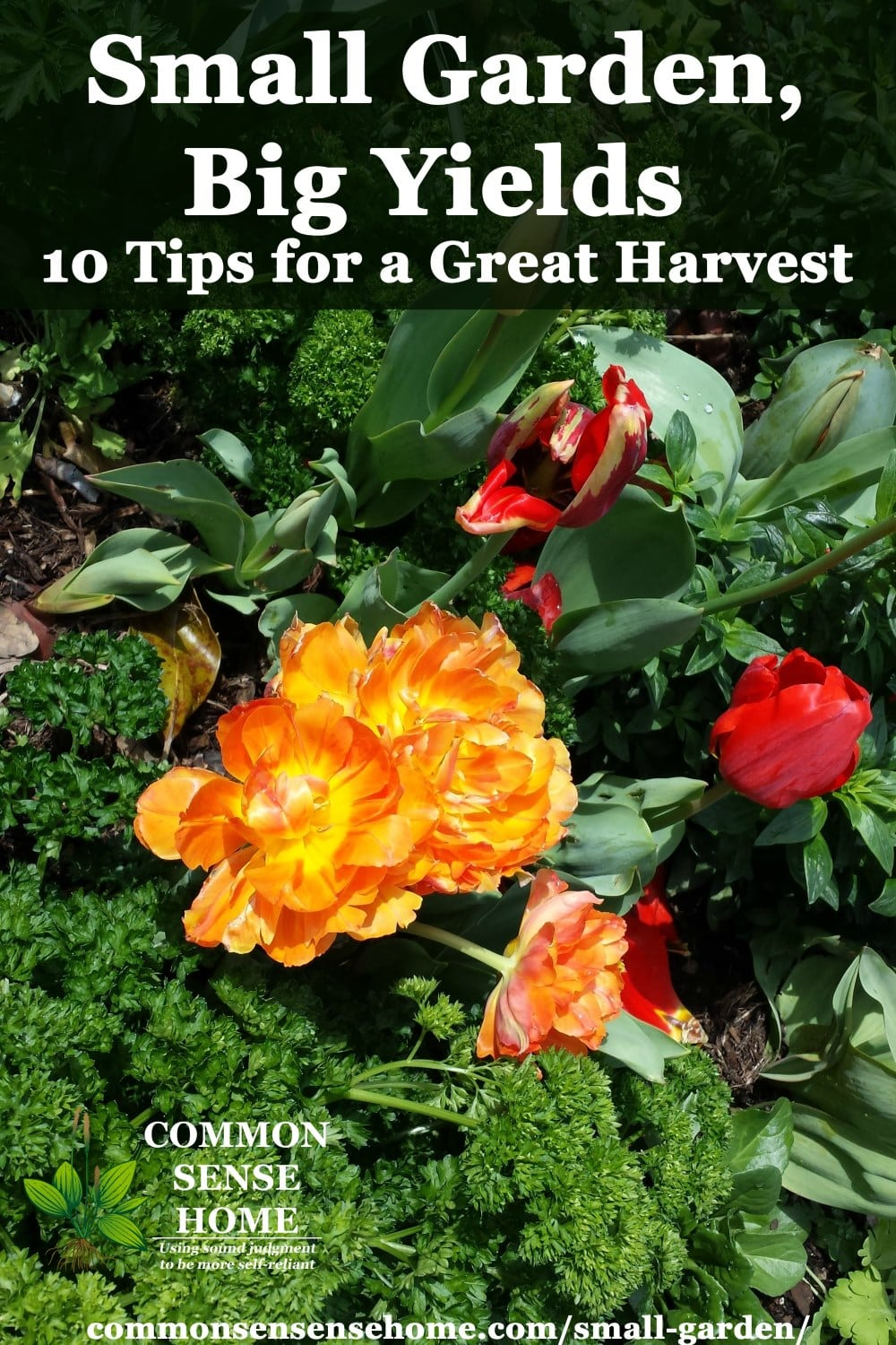 28 Tips For A Small Garden: 10 Tips To Grow More Food In Less