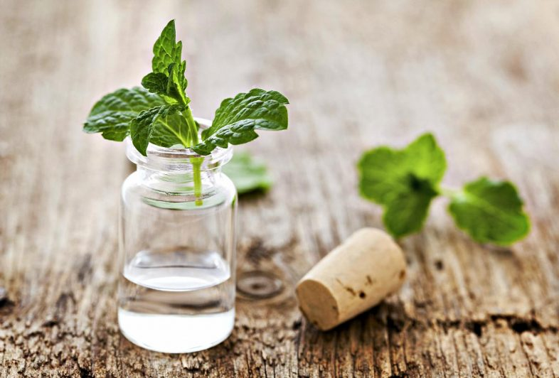 fresh-mint-oil-bottle-Medicinal-Essential-Oils-ss