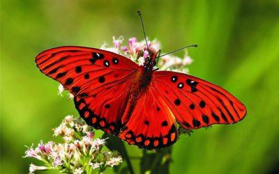 butterfly-clickertrainingDOTcom-400x250