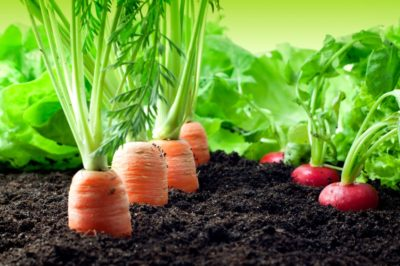 garden-soil-400x266