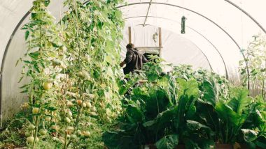 photo-of-man-standing-surrounded-by-green-leaf-plants-diy-greenhouses-px