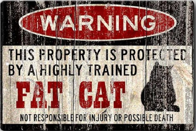 Funny-Cat-Signs-640x428