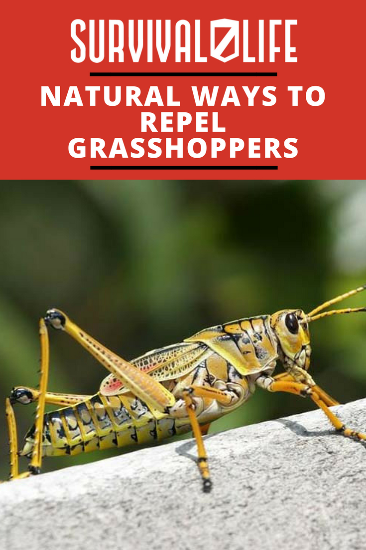 NATURAL-WAYS-TO-REPEL-GRASSHOPPERS-V2-1