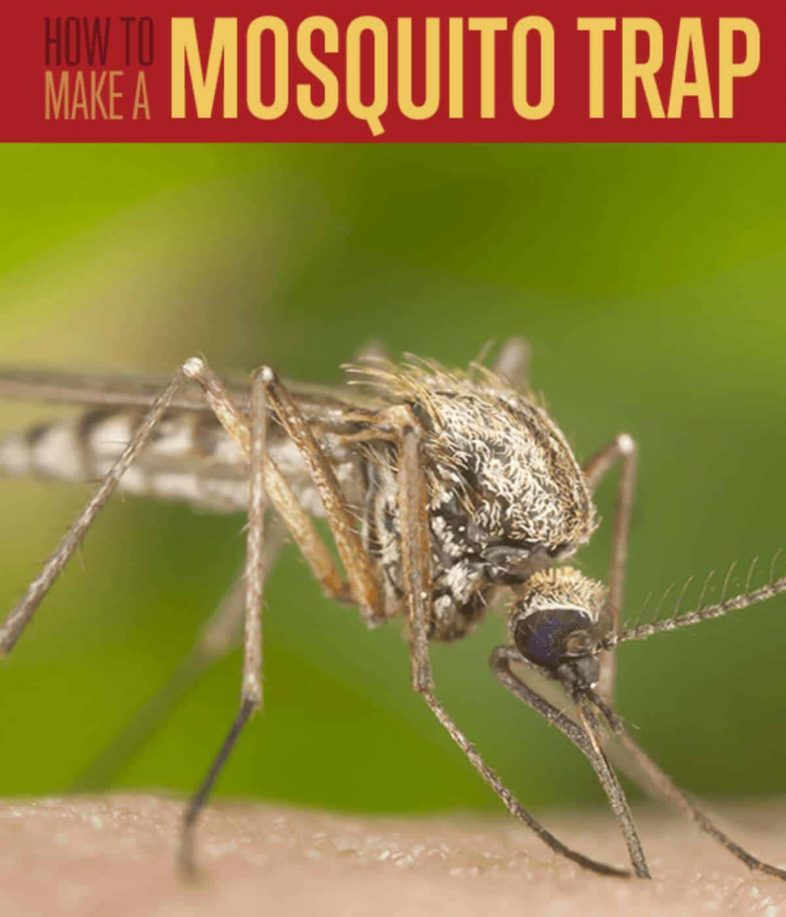 how-to-make-mosquit-trap-homemade-mosquito-trap
